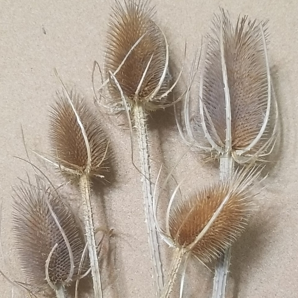Other - Textured stems